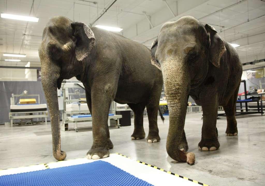 Elephant_9061